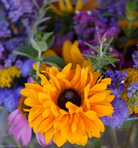 whipstone_flowers